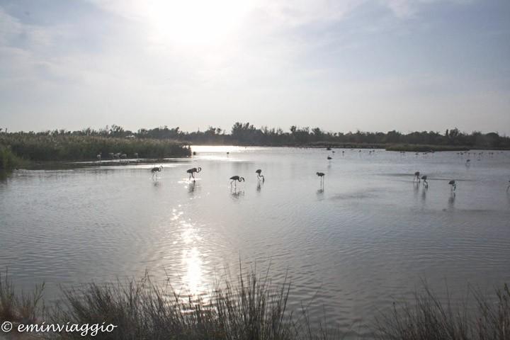 Provenza e Camargue Parc ornithologique de Pont de Gap