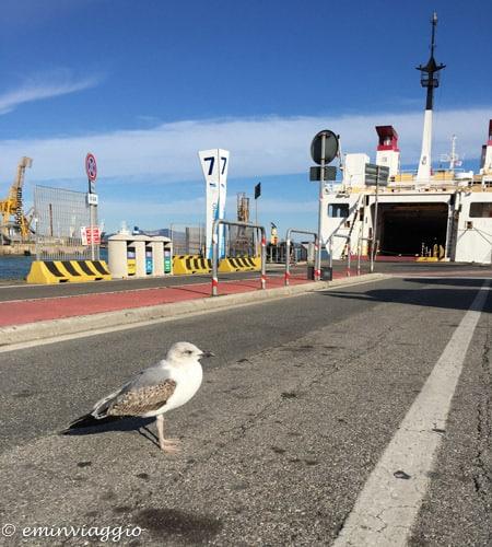 isola d'Elba, il gabbiamo