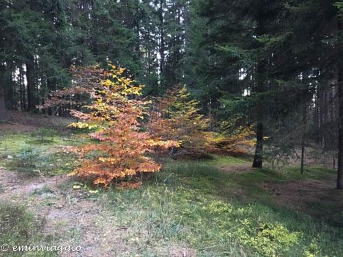 capannina di bedolpian bosco