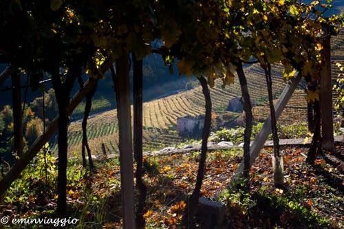 vigneti in autunno in Val di Cembra