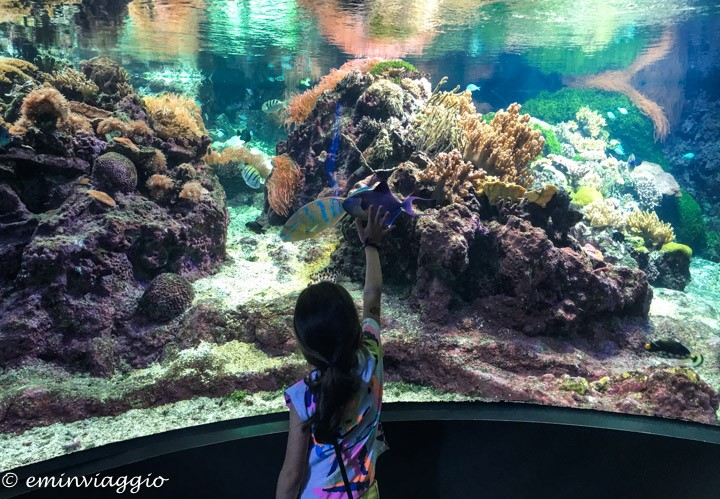 acquario di genova pesci tropicali