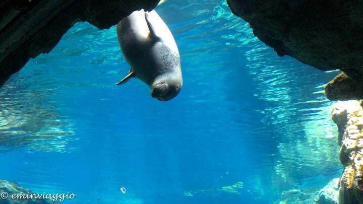 acquario di genova la vasca delle foche