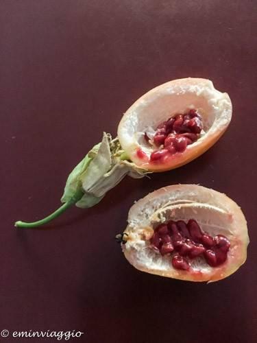 passiflora frutto della passione il contenuto del frutto