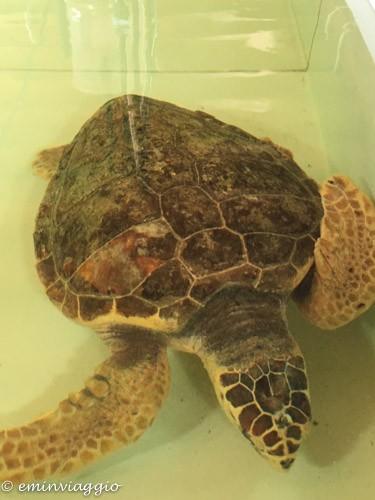 Alto Salento area di recupero tartarughe