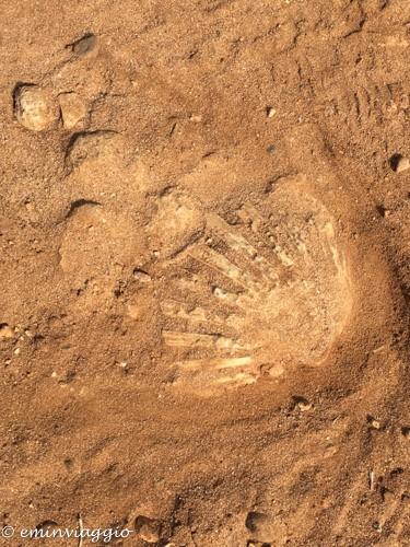 Alto Salento una scogliera di fossili