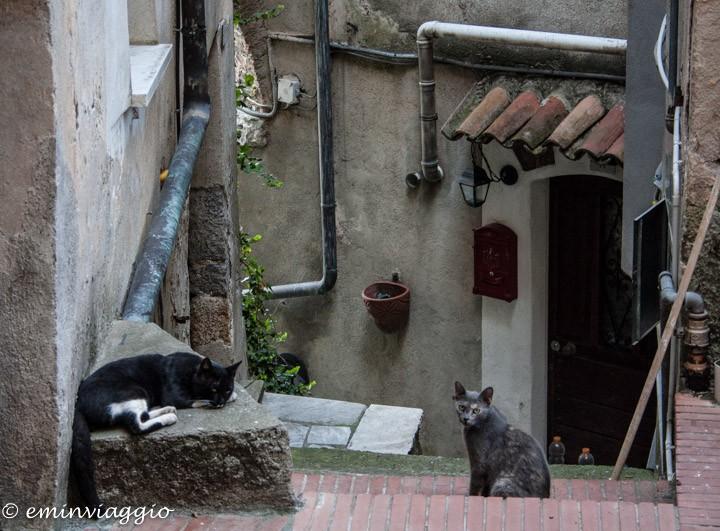 i gatti di Ameglia