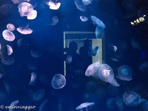 acquario-di-genova-meduse