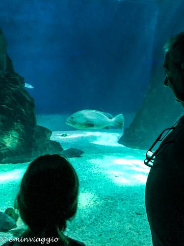 acquario-di-genova-