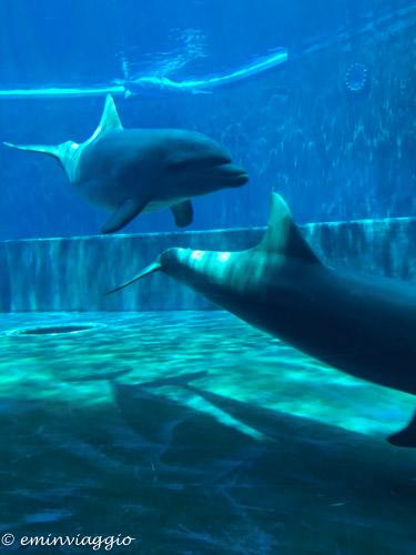 acquario-di-genova-delfini