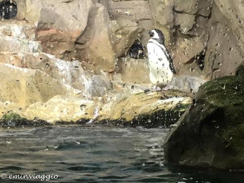acquario-di-genova-pinguini