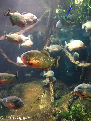 acquario-di-genova-pirana