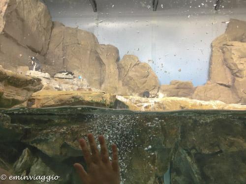 acquario-di-genova-vasca dei pinguini