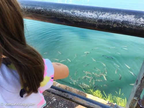 acquario-di-genova-pesci-nel-porto