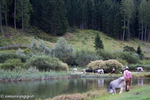 Desmalgada: dall'alpeggio estivo alla valle