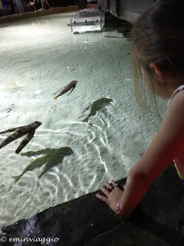 acquario-di-genova-vasca-tattile