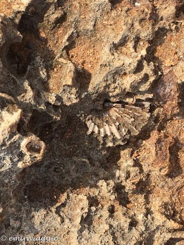 Alto Salento scogliera di fossili