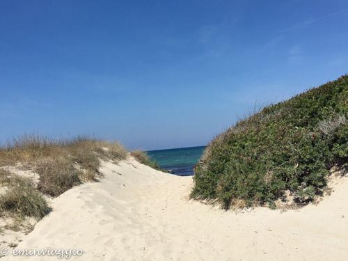 Alto Salento scorcio fra le dune